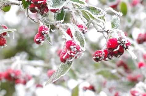 help wildlife survive the winter gloucestershire wildlife trust