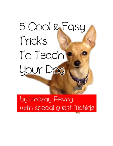 tricks to teach your 5 cool easy tricks to teach your