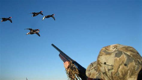 Duck Hunt duck tips for beginners the best and most