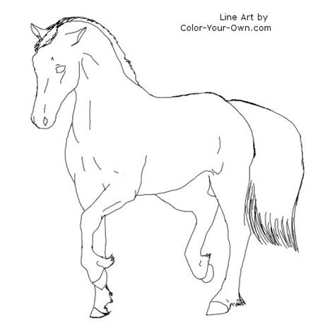 welsh pony coloring pages 500 x
