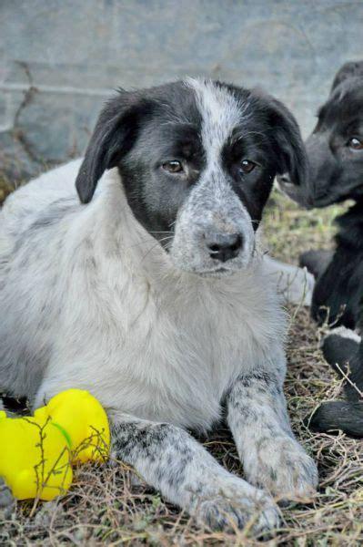 zuhause gesucht hunde zuhause gesucht hunde h 252 ndinnen rum 228 nische pf 246 tchen