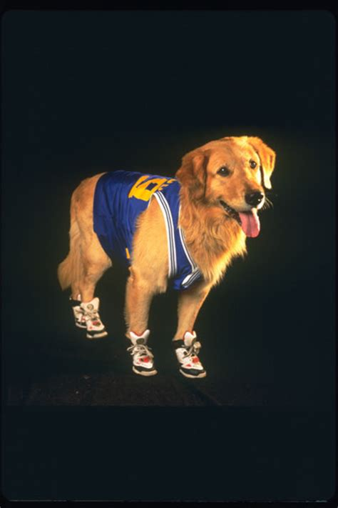 air bud air bud special edition michael jeter kevin zegers charles martin