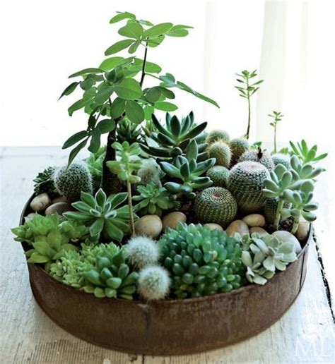 Succulent Planters Ideas by Diy In House Succulent Plants Ideas That One Inch