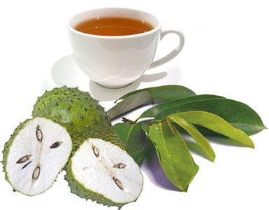 Teh Daun Sirsak benefits of fruit and leaves of soursop manfaat buah dan daun sirsak roy ryo blogs