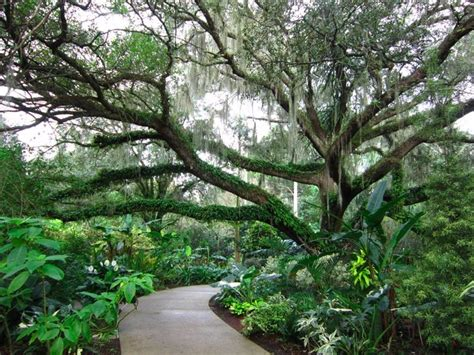 Leu Gardens by Here Are 10 Of The Most Beautiful Gardens That Florida Has