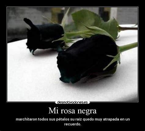 imagenes de rosas negras con frases de amor mi rosa negra desmotivaciones