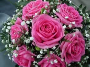 imagenes de rosas rosas hermosas seis bonitas rosas palanquinos