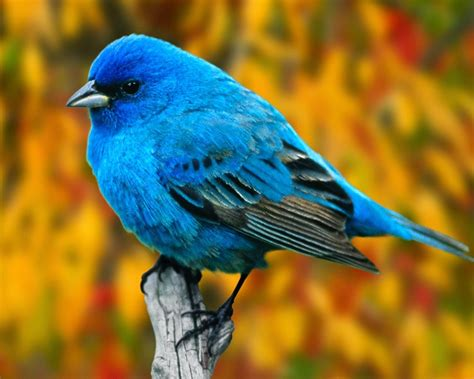 lovable images birds wallpapers free download