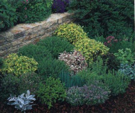 giardino aromatico giardino aromatico orto e giardino