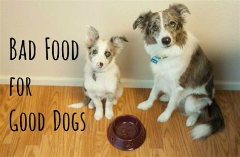 what foods can kill dogs 10 common foods that can kill your pethelpful