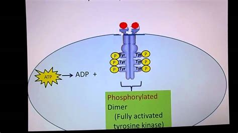 receptor tyrosine kinase youtube