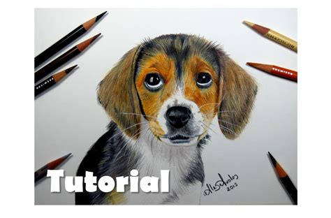 imagenes animales con pelo c 243 mo dibujar un perro c 243 mo dibujar pelo de animal
