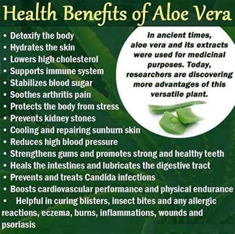 Aloe Vera Benefits Detox by 25 Best Ideas About Aloe Juice Benefits On