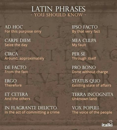 latin phrases tattoos best 25 phrases ideas on quotes