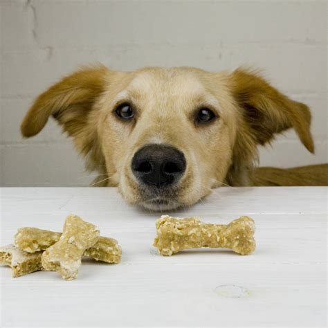 dogs and honey treats with apple and honey by the barker bakery notonthehighstreet