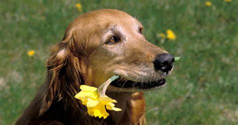 fiori bach cani fiori di bach e animali la storia di e suo