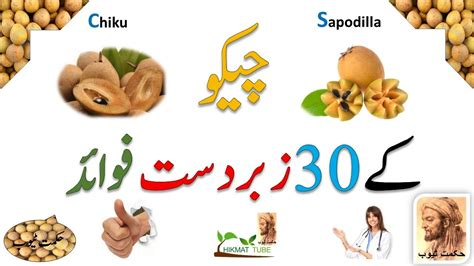 fruits ke fayde sapodilla benefits in urdu chiku fruit khane ke