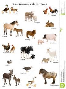 Turkey Barn Plans Collage Of Farm Animals In French Royalty Free Stock