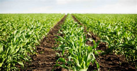 imagenes satelitales para agricultura agricultura microgea