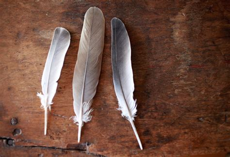 The Wisdom In Finding Feathers Rejuvenation Lounge Feathers Meanings