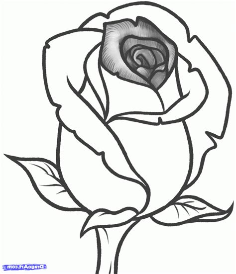 Easy Real Flowers To Draw drawing flowers how to draw a flower stepstep