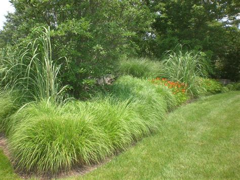 Landscape Grasses Constant Modifications Steve Grass Garden Design