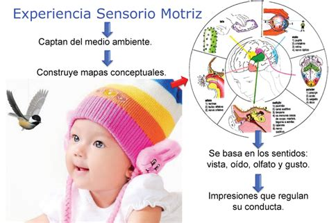 imagenes sensoriales olfativas definicion leonel psicopedagog 237 a de la excepcionalidad 3 3