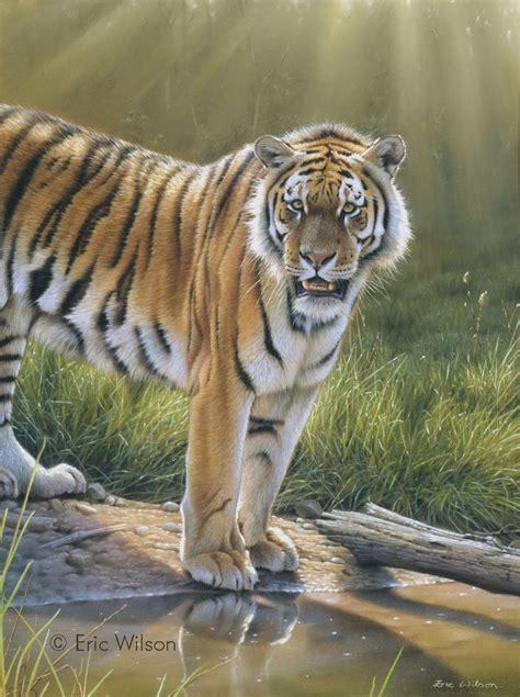 Painting Tiger eric wilson wildlife artist tiger paintings
