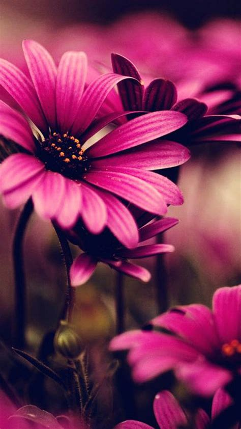 wallpaper for iphone flowers pink lovely flower
