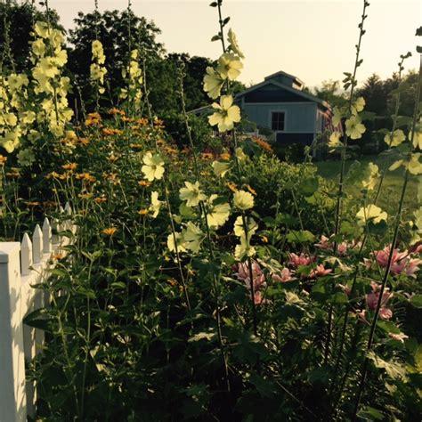 design study a perennial border burlington garden center