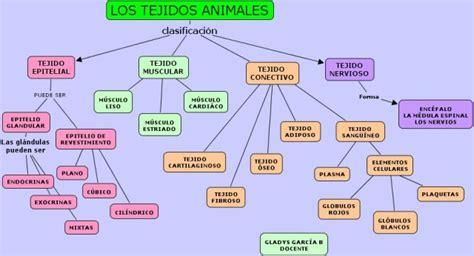 tejidos animales y vegetales cuadros 243 pticos sobre tejidos animales y vegetales