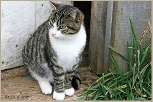 the personality of a tabby cat is quite unique in all respects