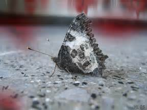 How To Tell If A Dog Is Blind The Butterfly Of Death And Dead Man Walking San Jacinto