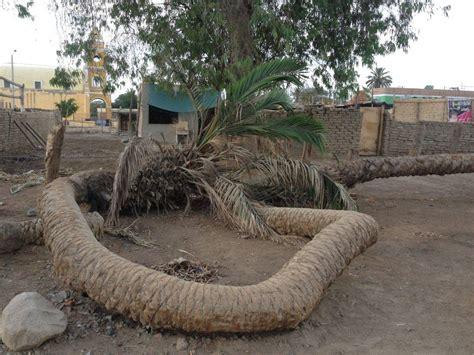 sette teste la leggenda della palma a sette teste di ica per 250