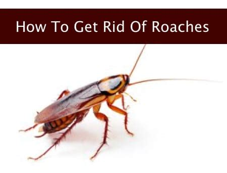 how to get rid of cockroaches in house how to get rid of cockroaches in house 28 images 6 ways to instantly get rid of