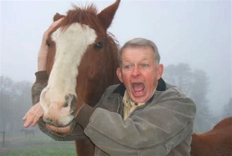 biting owner owner hopes to stop horses biting sports news