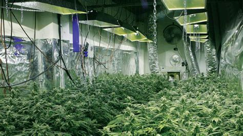 Japanese House Plants by This Is The Future 14 High Tech Farms Where Veggies Grow