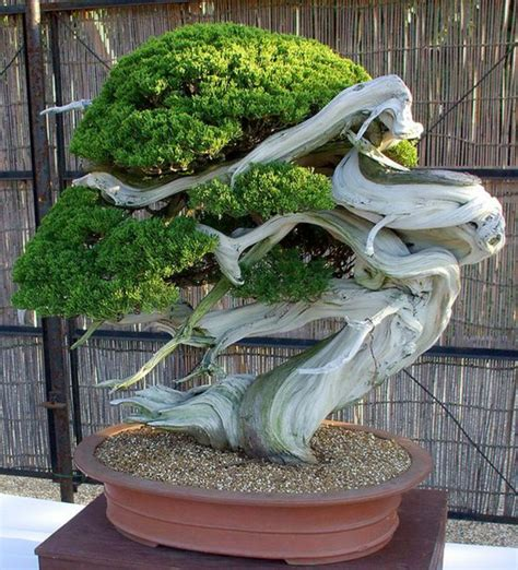 Wie Pflege Ich Einen Bonsai Baum 4451 by Bonsai Baum Kaufen Und Richtig Pflegen Einige Wertvolle