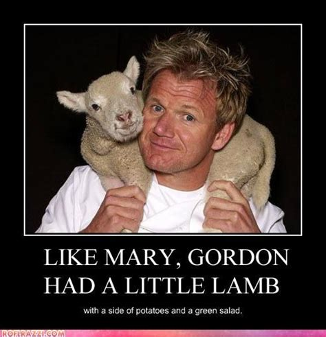 Gordon Meme - today s gordon ramsay chuckles 171 spraggett on chess