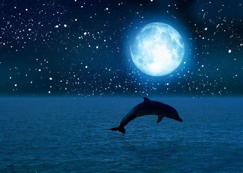 moon and light moonlight dolphin by monaimee14 on deviantart