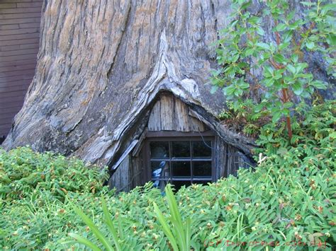 famous tree houses can you drive through redwood tree quotes