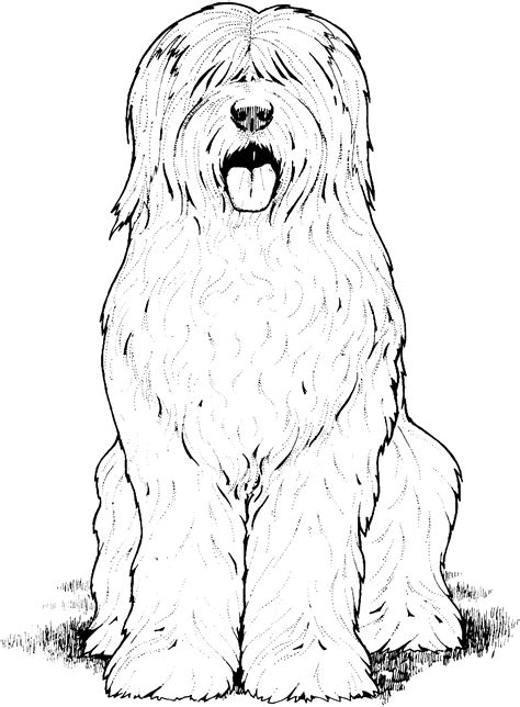 shih tzu puppies coloring pages shih tzu puppy coloring sheets coloring pages