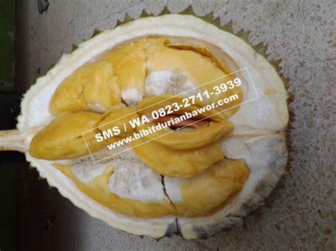 bibit durian musang king archives penjual bibit durian