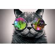 Fact  The First Cat In Space Catnipsum
