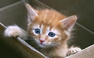 cats-<strong>kittens</strong>_00379052.jpg