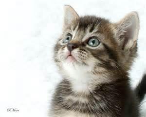 kitten01.jpg