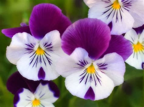 imagenes todo flores flores huancayo lo mejor para regalar