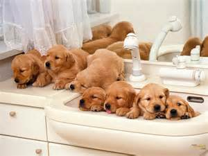 Puppies family wallpaper on this dogs wallpapers backgrounds website