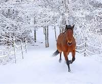 Horses In Snow  Simply Marvelous Horse World