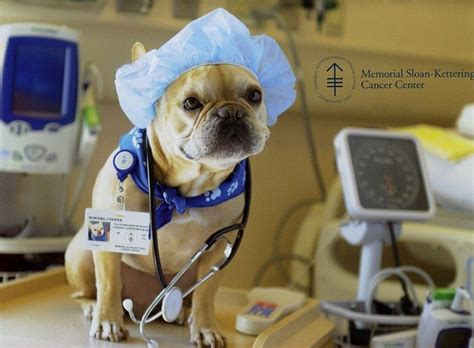 puppy doctor neutering a when to do it and why